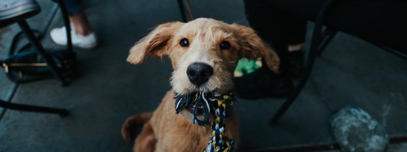 Frisco Dog Daycare